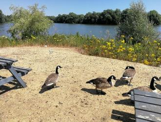 dine with the ducks at the Waterfront Cafe